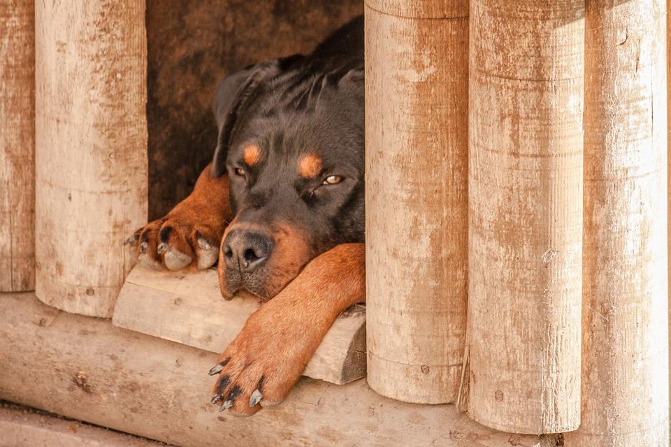 Quelle importance d'avoir une niche pour son chien ?